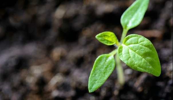 Dia Nacional de Conservação do Solo: Secretaria de Agricultura de SP atua com medidas de proteção e melhorias