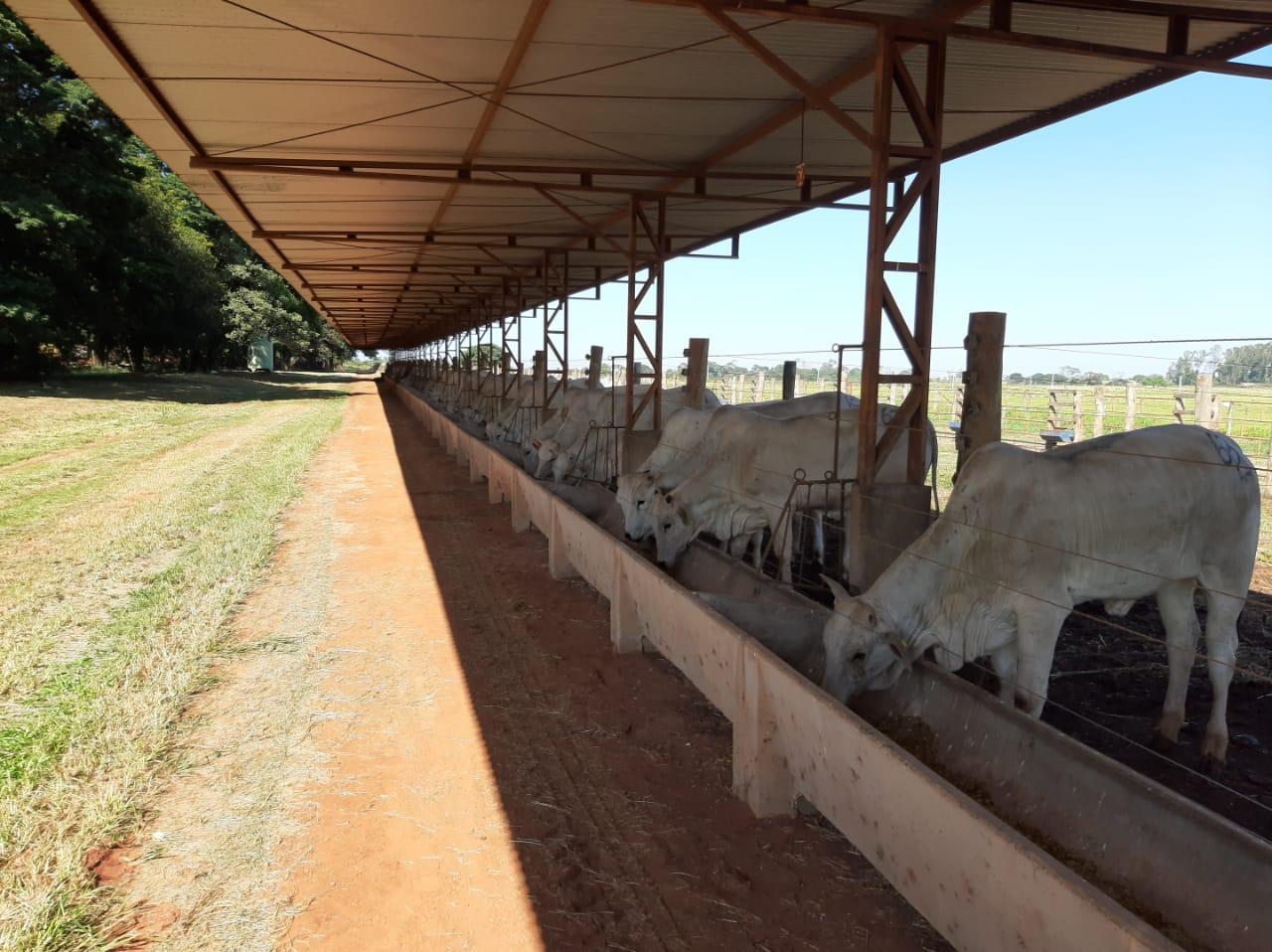 Cadeia produtiva de gado de corte conhece tecnologia da APTA para produção de novilhas precoces